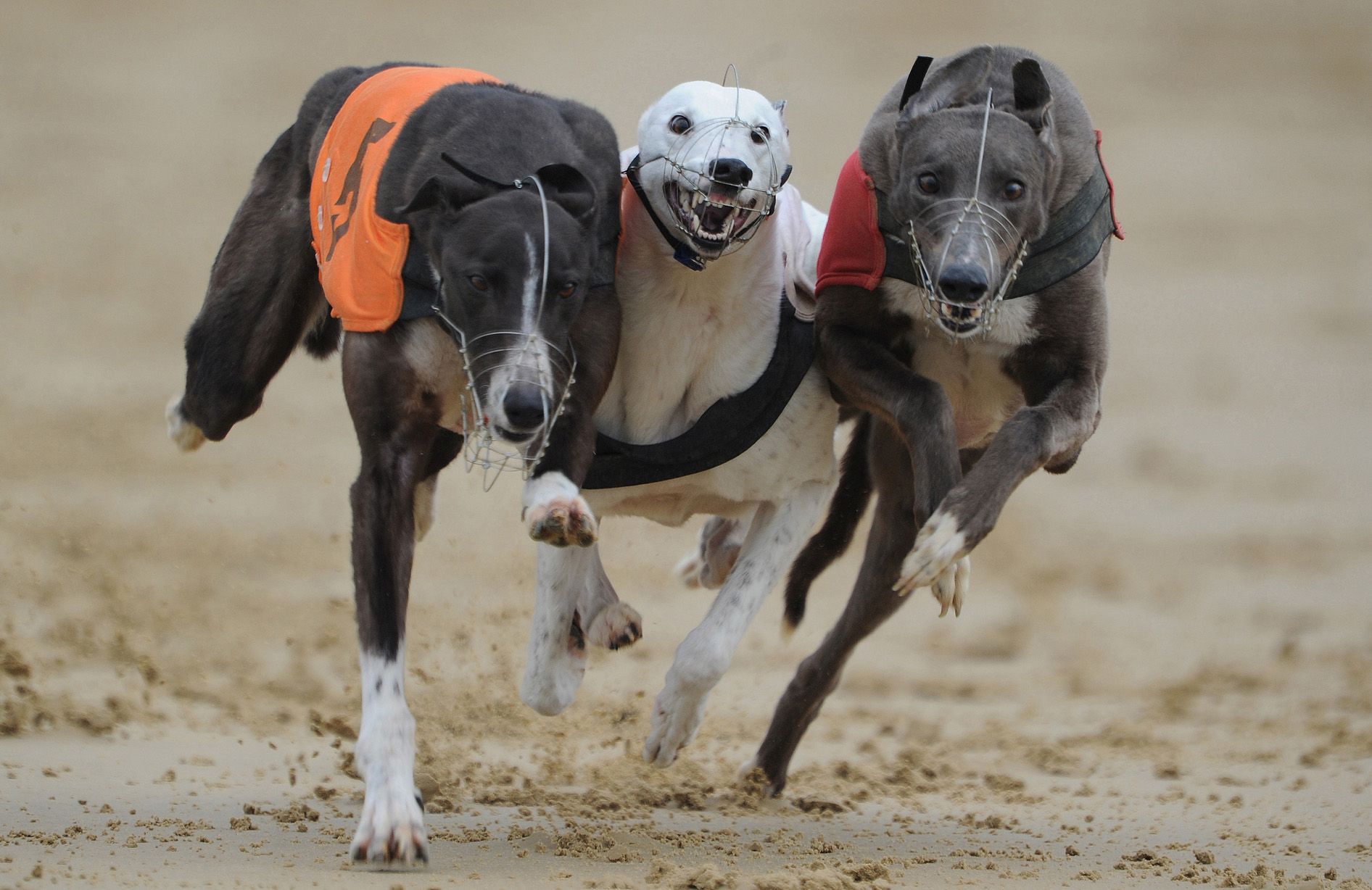 Greyhound Racing - Oxford