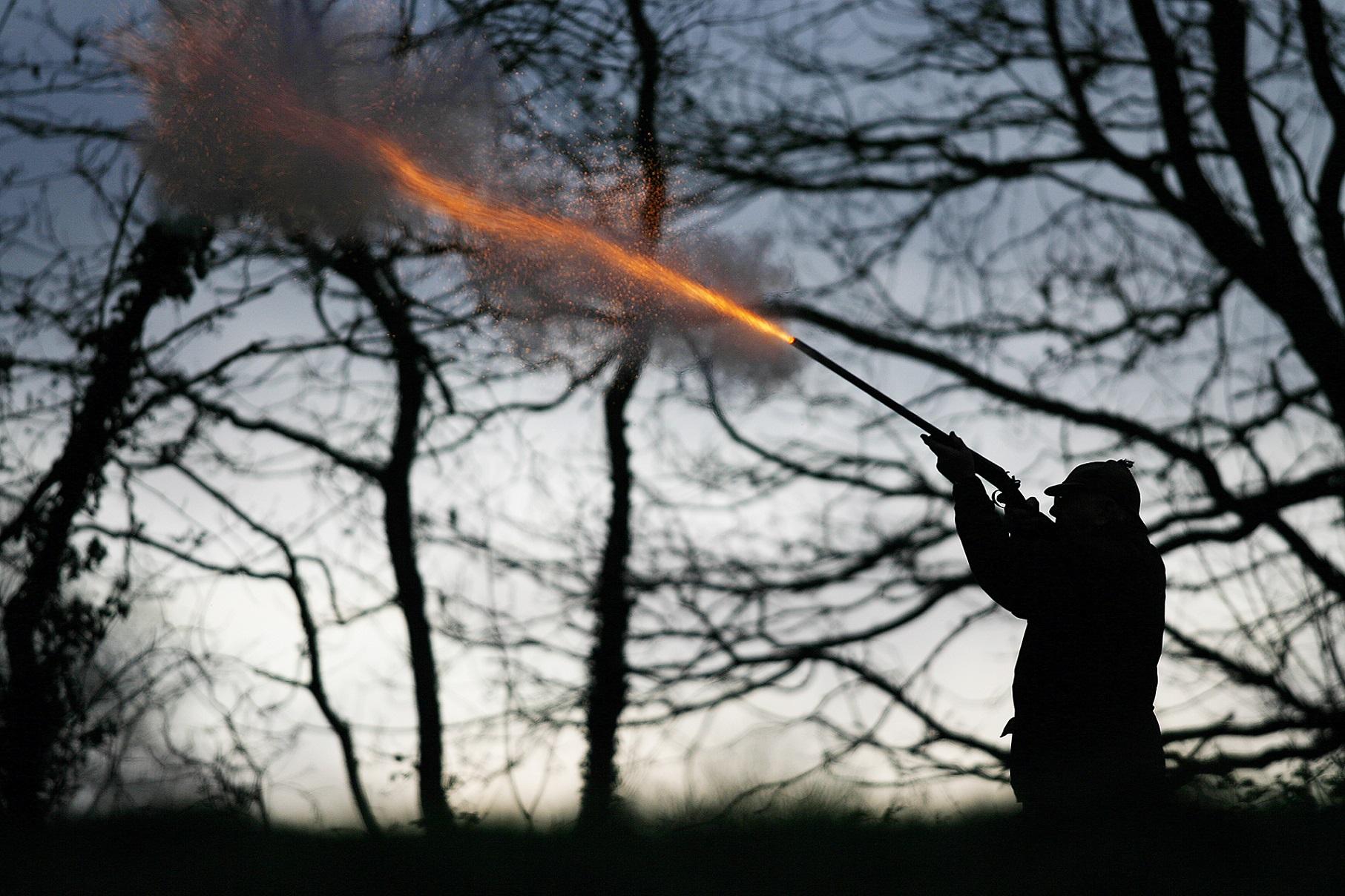 Pheasant Shooting - Devon